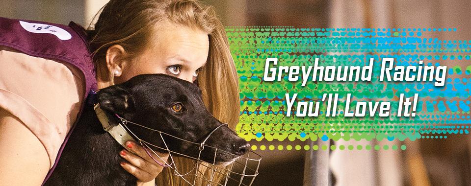 New Greyhound Racing Banner